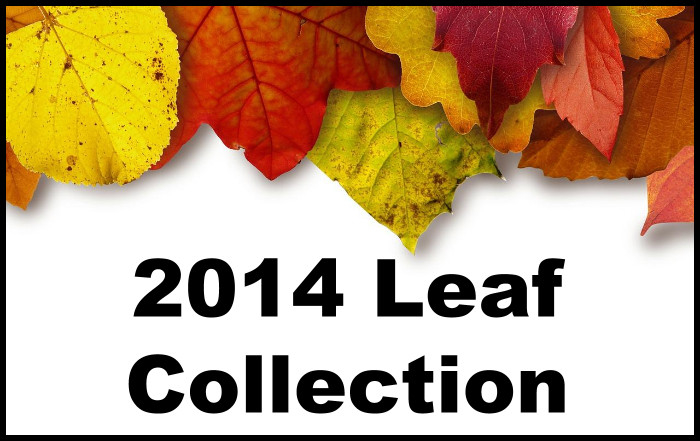 Leaf Collection 2014